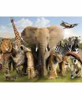 Groothandel fotografische poster wilde dieren speelgoed