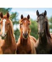 Groothandel paarden placemats 3d speelgoed 10063047