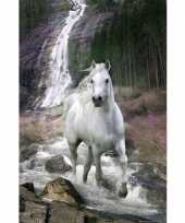 Groothandel poster wit paard 61 x 91 5 cm speelgoed